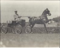Aaron Frank driving his prized horse, Aloma. Circa 1920s
