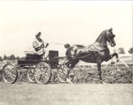 Mrs. Frank driving a carriage pulled by Aloma
