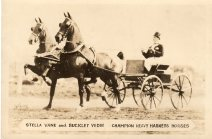 Aaron Frank driving Stella Vane and Buckley Vedie, champion heavy harness horses