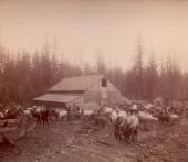 Shattuck Dairy - barnyard,milk wagons, log road