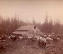 Shattuck Dairy - barnyard,milk wagons, log road