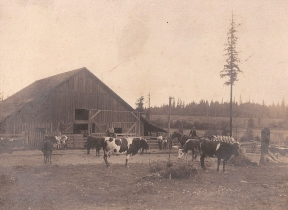 Shattuck Dairy - cows, 4 men, 2 boys, tall tree