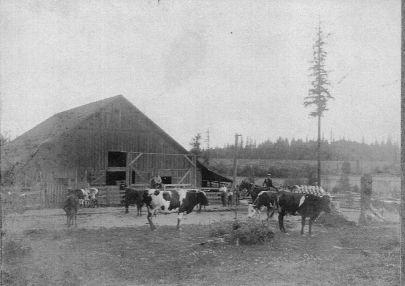 Shattuck Dairy feedlot, barn