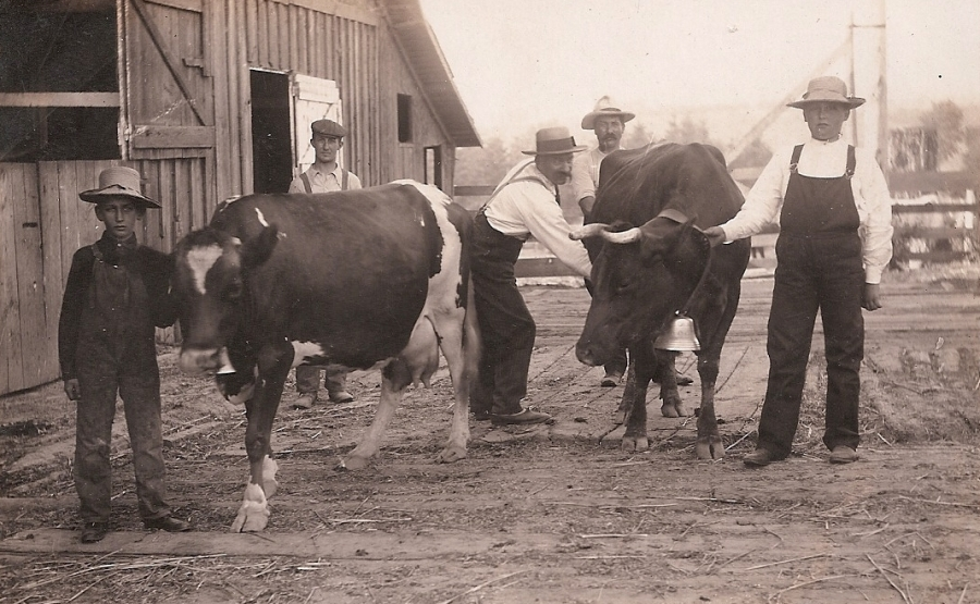 Shattuck Dairy - two cows w bells