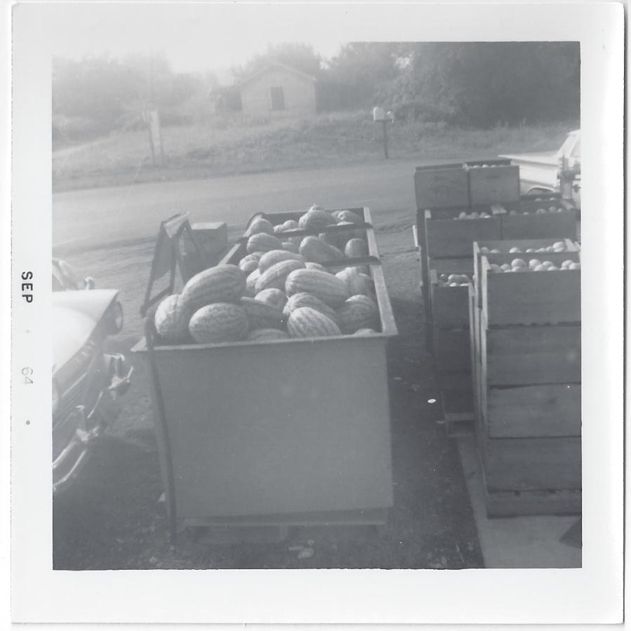 Whitney's Cannery - Fresh produce 1964