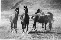 Frank horses