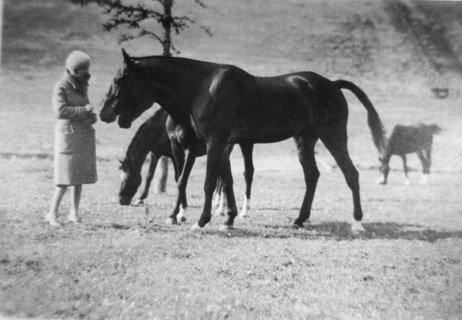 Ruth Frank and horses