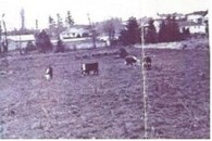 Marugg dairy farm was active in the 1940s and 50s