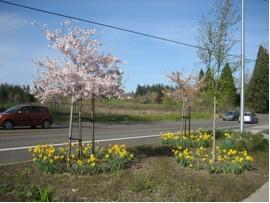 Oleson Gardens 2008