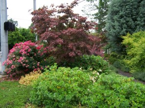 Terry Moore memorial garden on SW Oleson Rd (looking north)