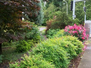 Terry Moore memorial garden on SW Oleson Rd (looking south)