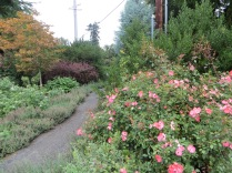 Garden at SW 80th Ave and SW Oleson Rd, 2013