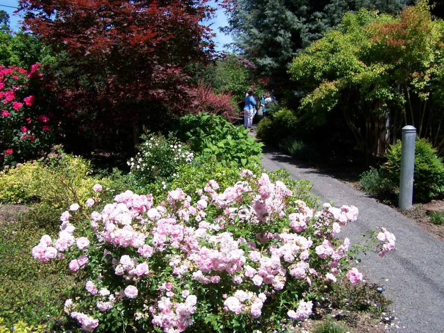 Terry Moore memorial garden entry