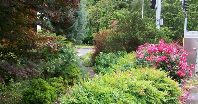 Terry Moore memorial garden