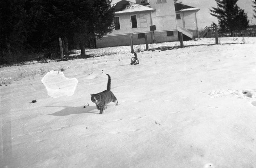 Replogle cat near school, 1920s
