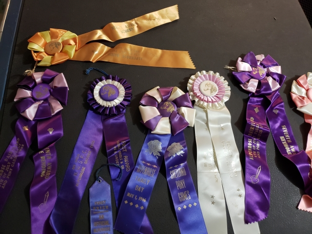 Jacki Wisher prize ribbons for Shetland Pony events
