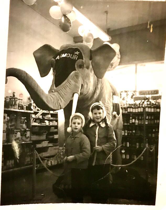 Stuffed elephant in Lambs Thriftway - Robin Ariss