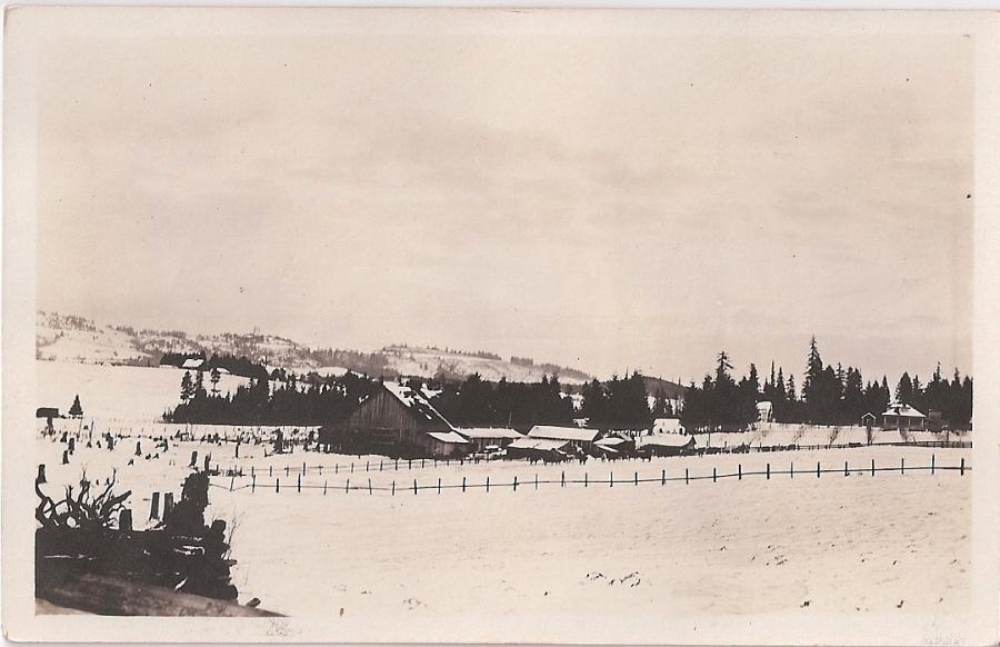 Snowy Shattuck dairy farm