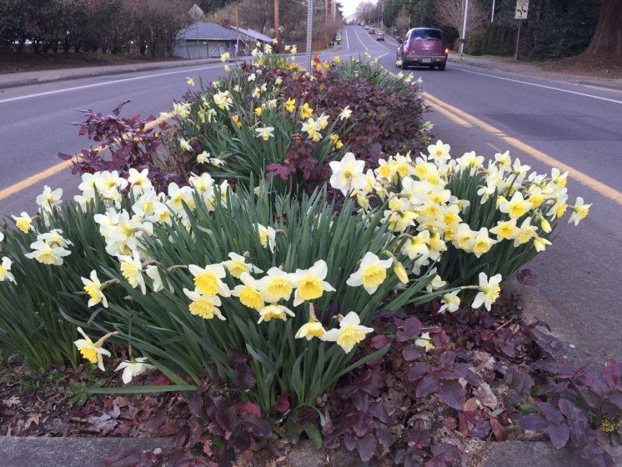 Garden Home Gardeners - Oleson at Skyhar